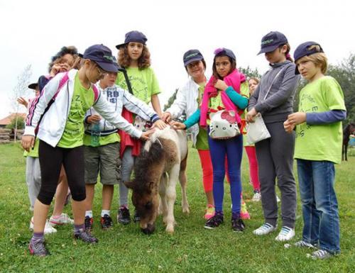 letnji-kamp-na-zlatiboru-2013 10